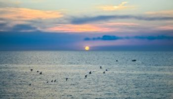 Colorful Mediterranean sunset with flock of birds