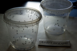 BRAZIL-SENEGAL-SCIENCE-HEALTH-ZIKA-VIRUS