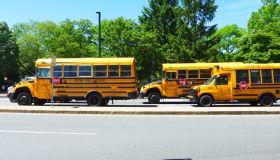 School Buses On Road Against Trees In City